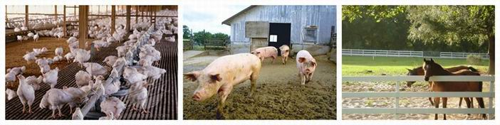how to make feed pellets for animal farm